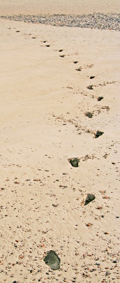 Footprints image by mailsparky